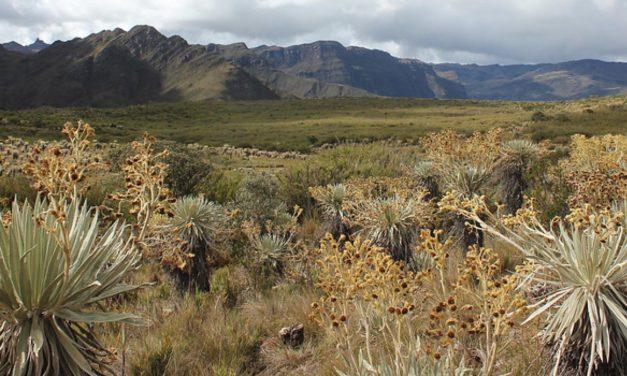 Nueva Ley de Páramos  genera vacíos a las autoridades ambientales
