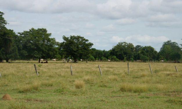 Proceso de restitución de tierras a media marcha