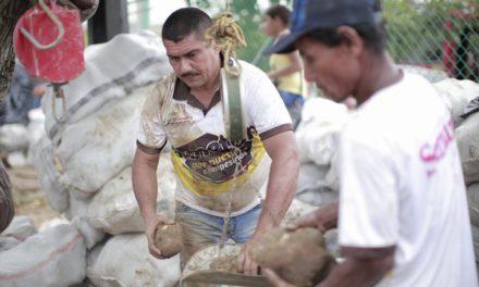 (Entrevista exclusiva) 'Coseche y venda a la fija': solución para la sobreproducción de ñame