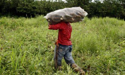 Cardique firma convenio de cooperación científica para apoyar ganaderos de Montes de María