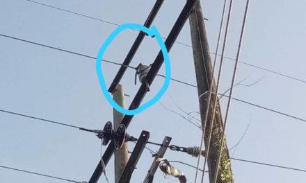 Electricaribe denuncia vandalismo contra línea que lleva energía a Guamal Magangué