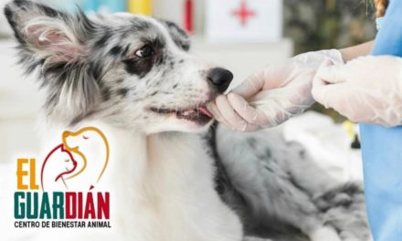 El Guardián invita jornada de salud y recreación animal gratuita