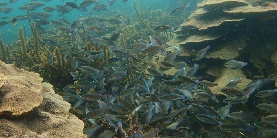 Cartagena: corales de Varadero a un paso de convertirse en zona protegida
