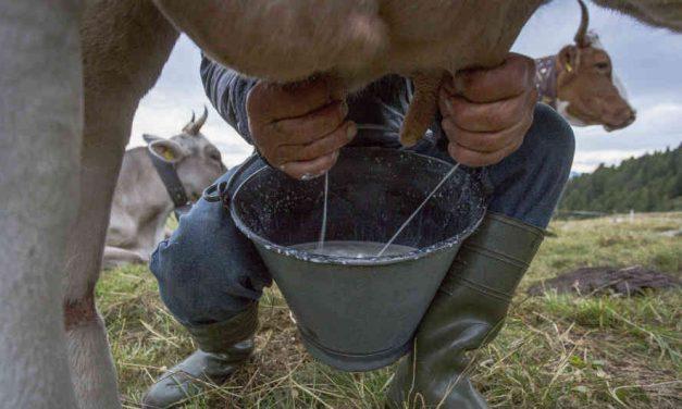 Lecheros colombianos reclaman a procesadoras por importar leche en polvo
