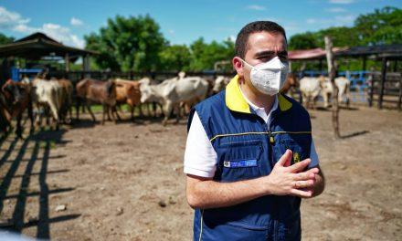 'Bolívar Primero' adelanta proyecto de repoblamiento bovino en Calamar y El Guamo