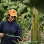 SENA y FAO firman alianza para fortalecer el desarrollo rural en Colombia