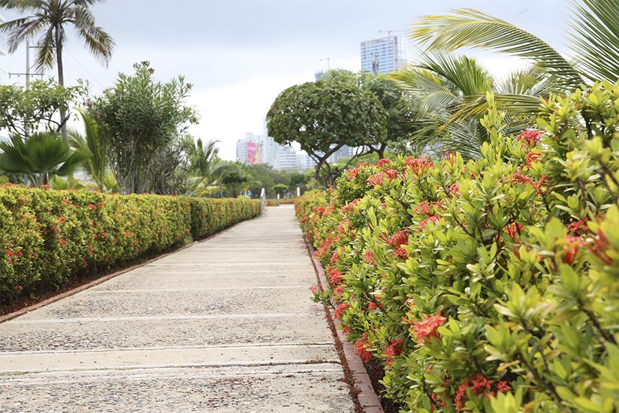 Así va el proceso de adopción de parques y zonas verdes en Cartagena