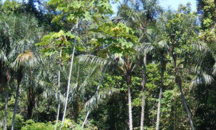 Colombia recibió 28 millones para combatir la deforestación