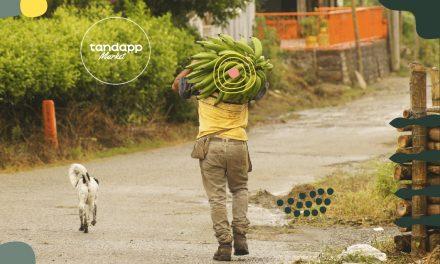 Tandapp, del campo a Cartagena