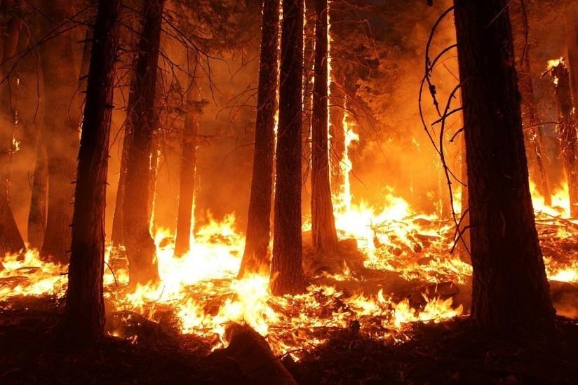 Se enciende la alarma por incendios forestales
