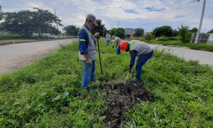 Aproximadamente 100 árboles serán sembrados en el barrio Ciudad del Bicentenario