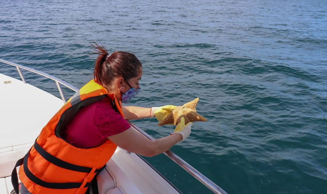 198 kilogramos de moluscos provenientes de Bogotá fueron devueltos al mar