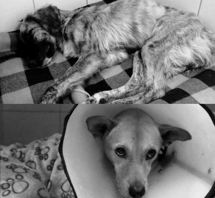 Perro murió luego de ser abusado en Risaralda