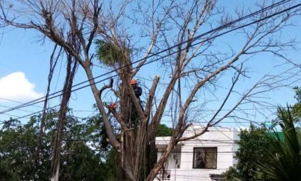 EPA informa que siguen envenenando árboles en barrios de Cartagena