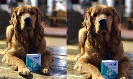 Nexentia lanza innovador producto para perros