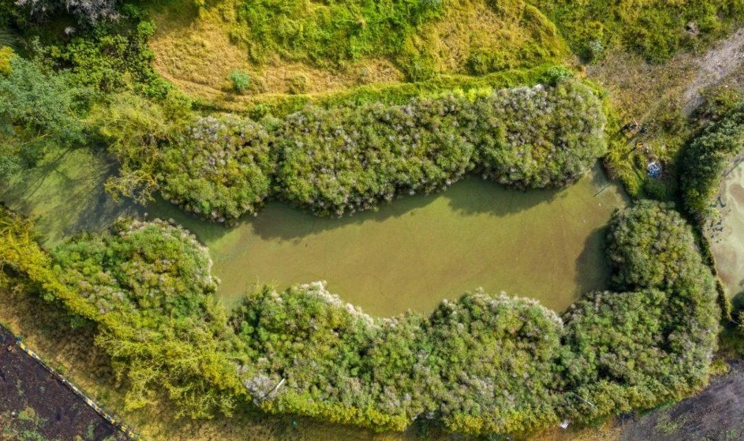 Hallan nuevo humedal en la reserva Van Ser Hammen