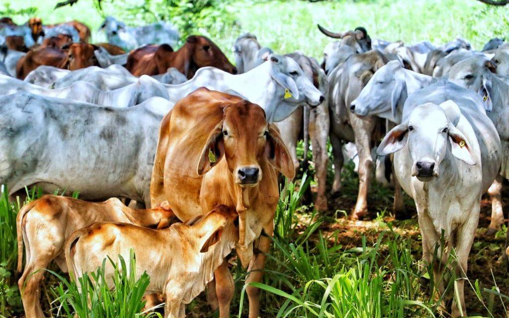Se anuncia apertura del mercado de Catar para exportaciones de carne bovina colombiana