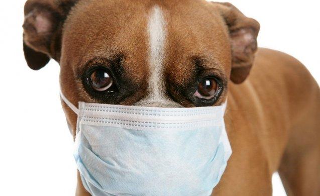 Nueva variante de covid-19 puede afectar a perros y gatos