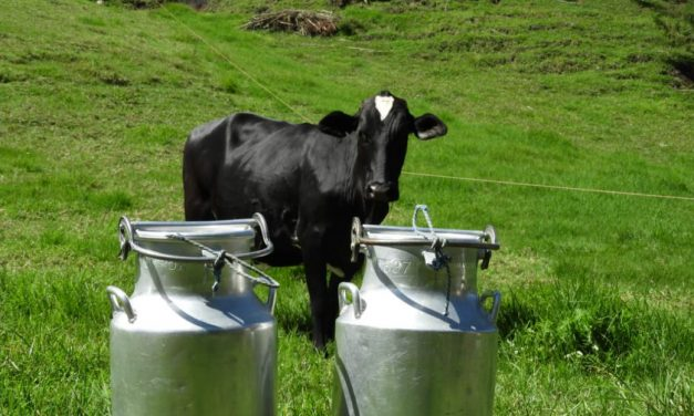 Antioquia busca alternativas para distribuir dos millones de litros de leche represada