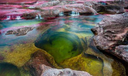 Caño Cristales, una de las grandes maravillas de la naturaleza reabre sus puertas