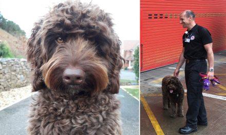 Perro salva la vida de joven que planeaba saltar de un puente peatonal