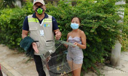 Aumentan los rescates y entrega voluntaria de animales silvestres