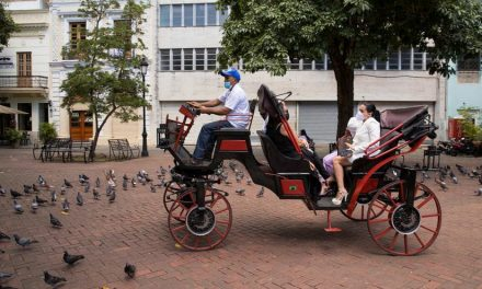 Presentan proyecto de ley para que se reemplacen los vehículos de tracción animal